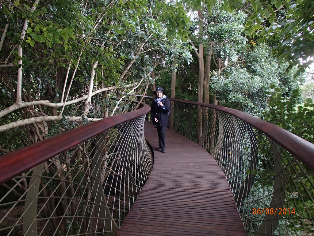 Canopy walkway at the Cape Town Botanical Gardens