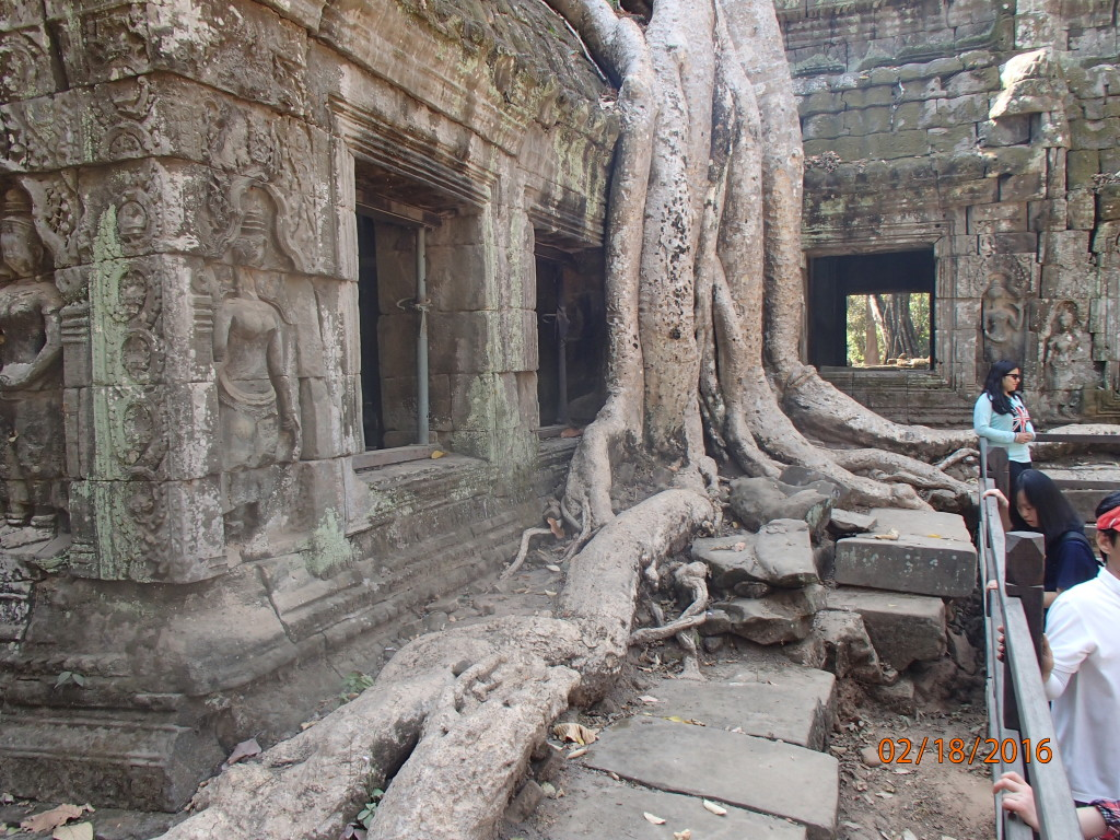 Ta Prohm temple being strangled by trees