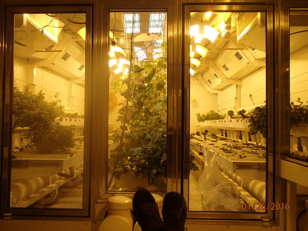 The grow chamber at the South Pole for fresh greens